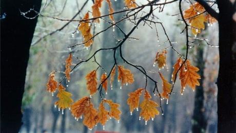 31 октября на большей части Казахстана ожидаются осадки, туман, гололед