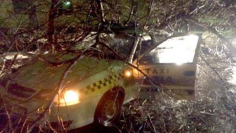 В Темиртау дерево упало на движущееся такси