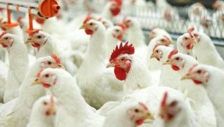 В ВКО построят новую птицефабрику